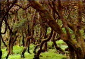 Foto de un bosque de laurisilva